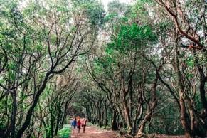 Tenerife Walking Festival FFrandonnée - Forêt